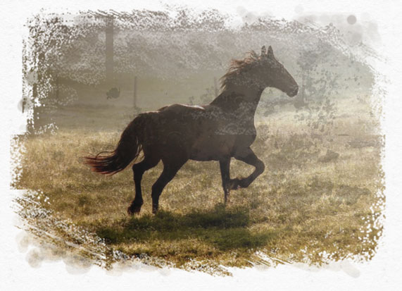 home_horse_pic3