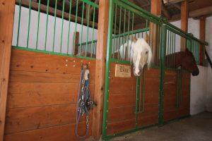 konj v hlevu