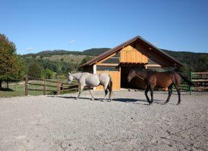 Hlev in dva jahalna konja